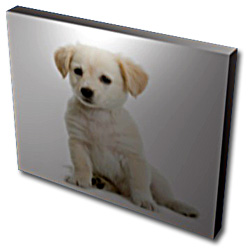 Canvas Canvas Photo Prints Custom Made Picture Frames